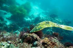 20150905-DSC_3069.jpg (d3_plus) Tags: sea sky fish beach japan scenery underwater diving snorkeling  shizuoka    apnea izu j4  waterproofcase    skindiving minamiizu       nikon1 hirizo  1030mm  nakagi 1  nikon1j4 1nikkorvr1030mmf3556pdzoom beachhirizo misakafishingport  1030mmpd nikonwpn3 wpn3