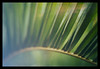 palmera (amargureiro) Tags: green closeup vintage nikon bokeh palmtree frame colourful defocus 50mmf18af d80