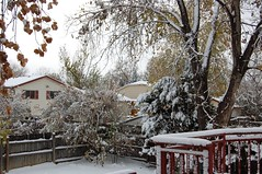 November 11, 2015 - A snowy start to the day in Thornton. (LE Worley)