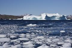 _DSC8854 (TC Yuen) Tags: glacier arctic greenland whales iceberg crusing floatingice polarregion greenlandeast