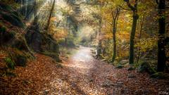 Forest - finistère - 29- (f.ray35) Tags: foret forest bois wood light feuilles automne autumn tree arbre finistère bretagne france huelgoat