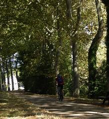 un altro modo di vivere il canale (fotomie2009 OFF) Tags: francia canal du midi tolosa sud landscape canale toulouse trees alberi france platan platani sentiero ciclista
