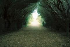 Phillip Island (pablo.sutton) Tags: 100iso lomographycolournegative pinhole hillvale nikonfm2n phillipisland trees path track fence green haunted twisted film filmisnotdead 35mm analogue spooky
