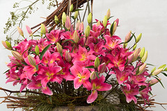 Lilienpracht (berndtolksdorf1) Tags: deutschland bayern bayreuth landesgartenschau lilien blumen flowers rosa pink pflanzen