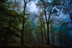 """Lost In The Woods"" (Melissa June Daniels) Tags: trees fog mist wx weather nature landscape tree cloud mood moody melissajdaniels melissajunedaniels melissajdanielsphotography thenymphandthebee mjdphoto colors tonality tone light shadow path leaves seasons autumn woods wood"