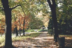 Autumn (Sareni) Tags: sareni selovenia slovenija maribor mb park citypark mestnipark tree treesmdrvo drvece branches granje staza path lisce list leaves leaf light svetlost colors boje shadows senke autumn fall jesen october 2010 twop