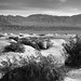 A Desert Landscape of Creosote Bushes, Sand Dunes and Far Off Mountain Peaks (Black & White, Death Valley National Park)