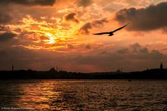 Sunset in Istanbul (Martijn Bergsma) Tags: sky city sea sunset water travel sun light clouds istanbul turkey architecture silhouette mosque beyoglu sultanahmet galata fatih sultanahmed hagiasophia kadikoy eminonu topkapi uskudar sultanahmetcamii yanicamii