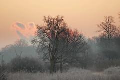 Winter Morning (Martine Lambrechts) Tags: winter morning landscape tre nature
