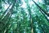 DSC02660 (Nai.) Tags: sonyrx100 taiwan taichung asia nature plants trees treeporn green greenness pine pinewoods