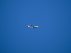 Airbus A330 Voyager KC3 (Leedseagle5) Tags: contrail vapour trail garrowby hill yorkshire nikon coolpix p900 leeds lufthansa star alliance easyjet klm airbus skywatcher slyliner dobsonian 200p 8 boeing 737 747 757 767 e3 sentry awacs volga dnepr ilyushin76td emarites delta atlantic airways american airlines a330 voyager kc3 a380