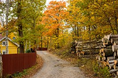 Smell of Autumn and Fresh Cut Wood (arne.lindgren) Tags: birch aspen maple oak logs fence autumn