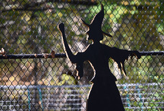 Witch Fence Friday (MTSOfan) Tags: witch halloween chainlink fence hff