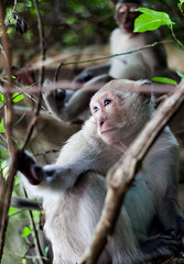 Monkeys (valeriodecinque) Tags: animals monkey scimmia asia vietnam isola island nature natura wildness