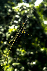 Spider family (MaRC0B) Tags: spider net laos jungle trees vang vieng
