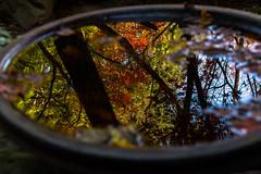 Autumn leaves on the water (Hiro_A) Tags: autumn leaves water jigen temple niihama ehime shikoku japan fall nikon d7200 sigma 1770mm 1770