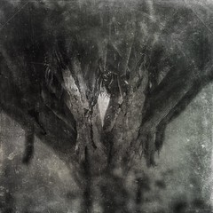All Of Our Journeys Lead To Home 10 (michelle-robinson.com) Tags: michellerobinson michmutters fineartphotography monochrome blackandwhitephotography 4tografie flickrelite artphotography atmospheric photomanipulation photography adelaide southaustralia australia trees nature branches editedonipadair2