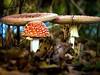family portrait... Fliegenpilze in freier Wildbahn (Florian Grundstein) Tags: fliegenpilz giftig pilze mushrooms poison red head wood forest wald natur natural nature leav blätter laub ursprünglich verträumt waldboden pov low olympus mft bokeh unschärfe schärfentiefe