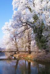 Winterliche Prachtbäume (Liwesta) Tags: tree winter eis ice rauhreif cold kalt wolfsburg aller niedersachsen deutschland germany