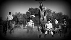 Bem parada (Eduardo Amorim) Tags: gacho gachos gaucho gauchos cavalos caballos horses chevaux cavalli pferde caballo horse cheval cavallo pferd crioulo criollo crioulos criollos cavalocrioulo cavaloscrioulos caballocriollo caballoscriollos pampa campanha fronteira bag riograndedosul brsil brasil sudamrica sdamerika suramrica amricadosul southamerica amriquedusud americameridionale amricadelsur americadelsud cavalo         hst hest hevonen  brazil eduardoamorim gineteada jineteada