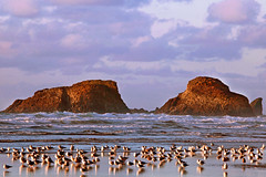 Stand Beside The Ocean (Ian Sane) Tags: ian sane images standbesidetheocean cannon beach oregon sea gulls reflections rocks pacific ocean landscape photography nature canon eos 5d mark ii two camera ef100400mm f4556l is usm lens