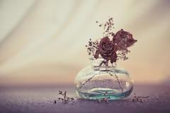 Still beautiful (RoCafe) Tags: stilllife roses wilted dry jar soft softlight romantic vintage nikkormicro105f28 nikond600