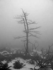 ~parnitha mountain~ (  2.000.000views!!!!) Tags: parnitha mountains blackwhite blackdiamond blackandwhite monochrome