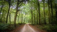 #### (Michael A64) Tags: duisburg duisburger wald forest baum bume weg waldweg