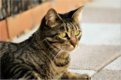 Relaxing sunday  (Simply Viola) Tags: cat gato katzen feline felino animal pet