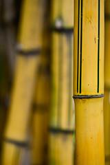 La Runion (ingridkreuz) Tags: runion indischerozean indianocean insel frankreich france outremer botanischergarten natur nature plants ppig tropisch tropical bambus bamboo structure struktur muster pattern