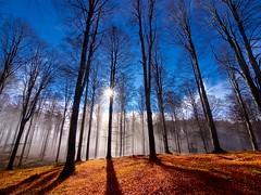 Al limite (Fernando De March) Tags: limite sole cielo foresta alberi colori nuvole nuvola sereno raggi