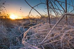 Morgen Frost (Burr_Brown) Tags: sonnenaufgang frost nah grad warm kalt kontrast nikon d750 1635 f4 kristalle eis