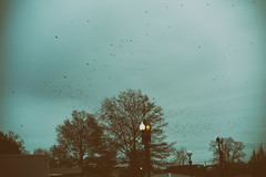 1,070 Birds (MikeSpeaks) Tags: washingtondc birds dusk artsy arty