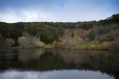 Mt Lofty Botanic Gardens Lake