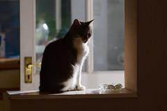 Lucy enjoying the sunlight without needing to go outside for it :) (eddcellentcats) Tags: cats sun sunlight sunshine cat feline kitty catnap sleepy snooze sleepyhead naptime kittycat snoozy