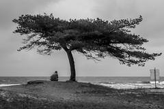 Hösttankar (MagnusBengtsson) Tags: blackandwhite monochrome skåne sverige höst träd hav österlen landskap horisont monokrom svartvitt vitemölle fotosondag fs151018