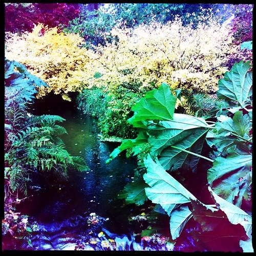 Geilston Garden, Cardross, Scotland