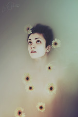 158/365 (Furcifer07) Tags: portrait flower water girl daisies self canon bath sink mark iii floating portraiture anchor daisy bathe 5d bathtub float submerge immersed lorenschmidt