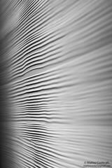 Deserto di sale (Conte17) Tags: eos 50mm idea astratto bianco nero notte simile 50d ispirazione 50ino