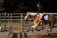 Doorn (Steenvoorde Leen - 3.4 ml views) Tags: doorn manegedentoom arreche manege springen jumping paarden horses hindernis fench halloween 2015 happyhalloween horse pferd reiten paard pferde haloween utrechtseheuvelrug cheval