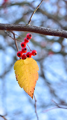 Red, Yellow and Blue (Don Briggs) Tags: fallcolor redyellowandblue donbriggs 105nikkormacrolens nikond750
