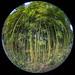 bamboo through a fisheye, Albert-Kahn garden, paris