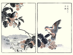 Silktree and white-bellied pigeon (Japanese Flower and Bird Art) Tags: flower bird art japan japanese book pigeon picture fabaceae woodblock nihonga silktree columbidae albizia julibrissin maekawa whitebellied treron sieboldii readercollection bunrei