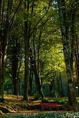 Jardim da alameda Roberto Vaz de Oliveira (vmribeiro.net) Tags: santa trees portugal garden geotagged maria sony feira jardim roberto alameda vaz oliveira a350 geo:lat=4092307703 geo:lon=854194522