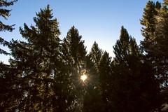 (lucaban87) Tags: trees sun mountain nature alberi natura pines sole bosco valseriana passopresolana
