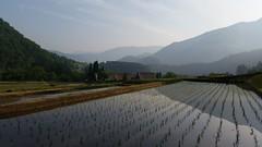flooded paddy fields of Shirakawago in the morning (lstr  clonn) Tags: houses japan rice villages historic unesco  japon shirakawago worldheritage  flooded paddies gassho japn      ogimachi gasshou  gasshozukuri     gassyou historicvillagesofshirakawago   japan2015    shirakawagounesco
