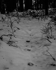 analoga spr (Mange J) Tags: fs161113 analog analogue bw blackandwhite fotosondag fotosndag snow track winter vrmlandsln sverige se