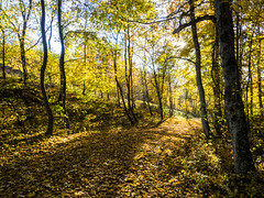 Autumn gold 1 (flickrolf) Tags: schwbischealb forest leaf leaves tree trees sun sunbeam shadow autumn fall harvestmherbst autonne