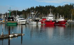 Tugs at Cap Sante Marina - Sep 24, 2016 (Jeffxx) Tags: live music rock anacortes 2016 tugboat tug boat red cap sante marina
