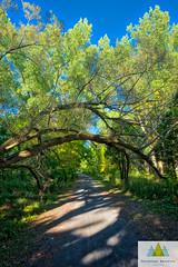 O caminho com a belleza (Elf-8) Tags: fall autumn color forest leaves tree path arch
